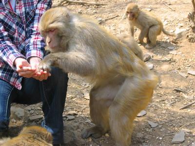 用瓶盖做小动物猴子图片大全
