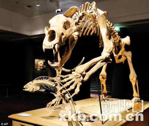 拍品是各种各样的史前动物残骸