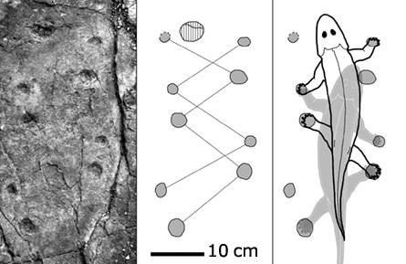 科学家发现最古老海洋生物登陆脚印