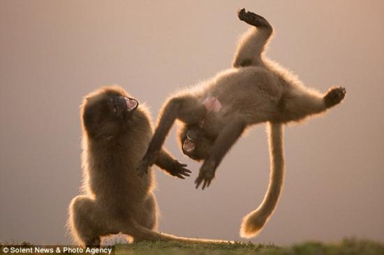 猴子尾巴图片大全