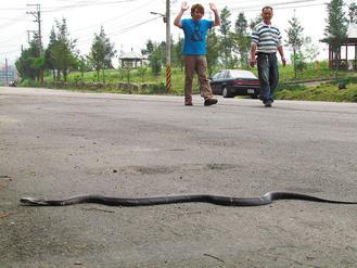 上坟坟头上遇见蛇