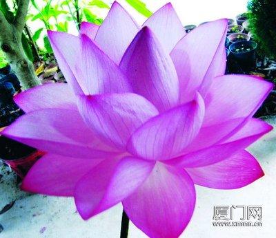 莲花折法步骤图解