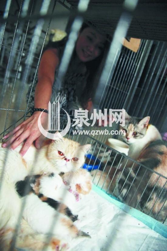 安娜 厦门/安娜称,照顾这些小猫不比照顾孩子轻松。...