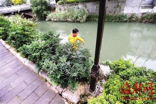福州 内河没装护栏只设隔离花圃 小孩玩耍易落水
