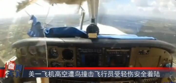 美一飞机高空遭鸟撞击飞行员受轻伤安全着陆
