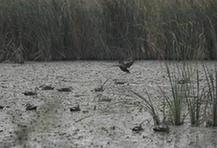 (环境)(1)杭州湾湿地的落日秋韵