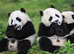 """(环境)(7)初夏的""""熊猫幼儿园"""""""