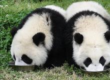 """(环境)(1)初夏的""""熊猫幼儿园"""""""