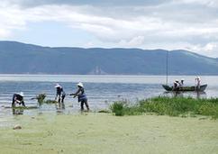 (環境)(1)大理洱海水質總體向好